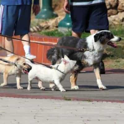 Dog sitter side job