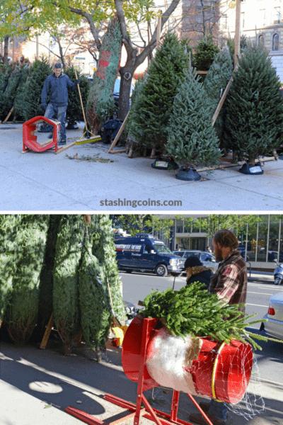 Selling Christmas trees - a way o earn extra side cash this Christmas season